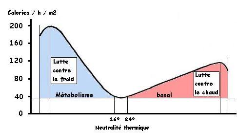 Métabolisme Base; basal metabolic rate; basal metabolic