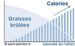 rapport-graisses-calories
